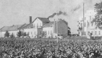 Dawne Zakłady Włókiennicze Lianka w b. pałacu Lubomirskich - źródło Franciszek Kotula Głogów Małopolski 1970